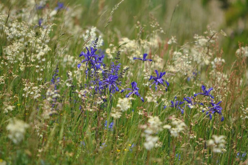 Frisch-feuchte Gartenbereiche - www.wildblumen-rheinhessen.de